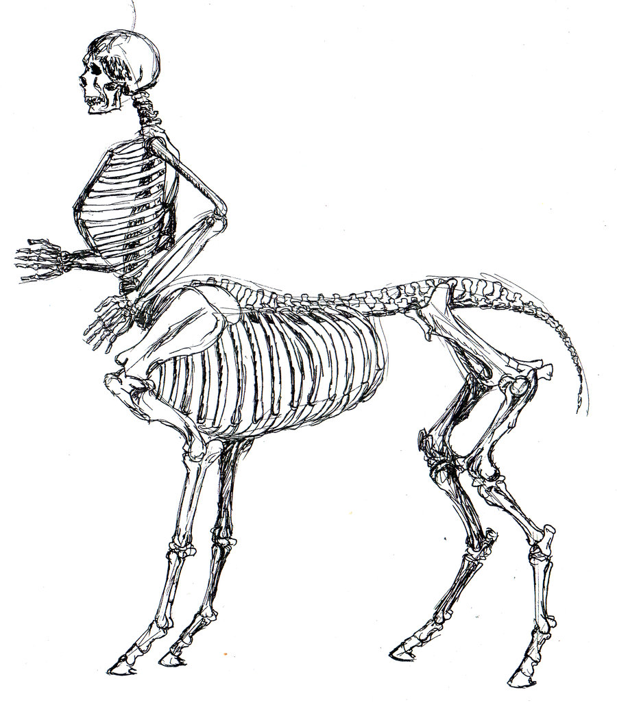 skeletal_centaur_anatomy_study_by_tursiart-d1ov3yk
